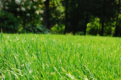 Our Lawn Services