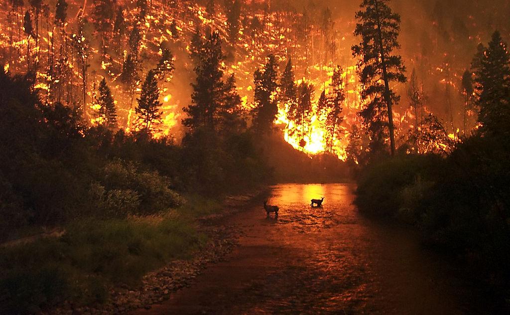 Colorado Wildfires 2017 on Tree Service Highlands Ranch